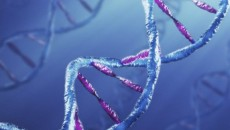 DNS_genetika