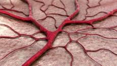 Véredények_6